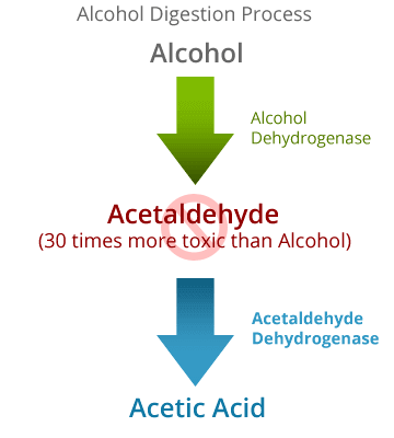 Alcohol Digestion Process